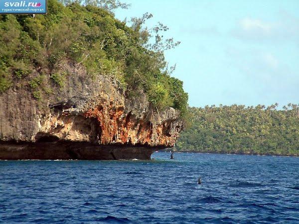 Тонга, Вавау, скалистый остров, морские птицы.
