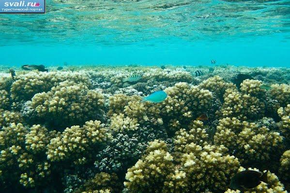 Тонга, Вавау, подводный мир